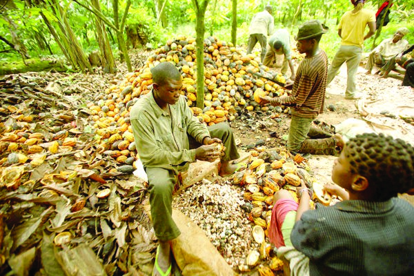 Four Top selling Agro export products you can start selling to
