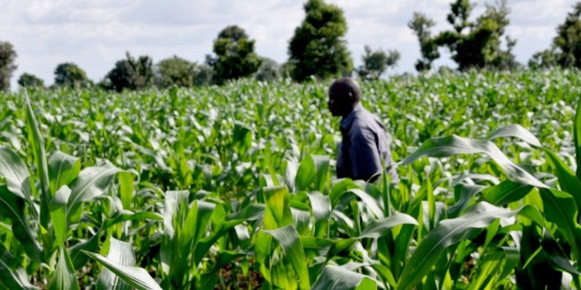 #7 reasons why you need to start investing in agro-business in Nigeria now