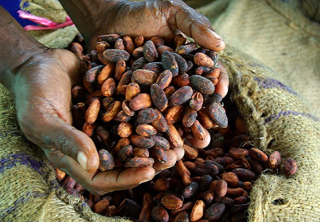 Exploring the opportunities in the Africa cocoa export business to Europe