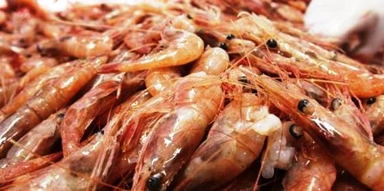 How to invest in fish and shrimps export business and its regulations