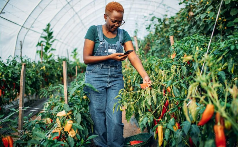 The future of agriculture export and how you can earn big